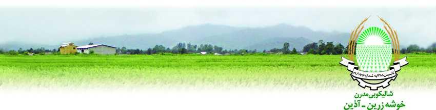 landscape for tweb - شالیکوبی خوشه زرین