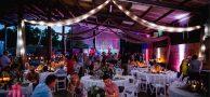 برگزاری عروسی در گاوداری